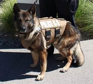 gjpd k9 receives new ballistic vest gvcopbeat gjco the With ballistic dog