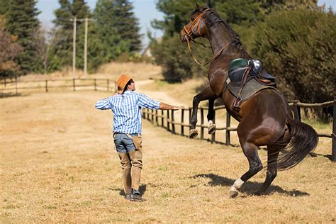 horse scared horses riding cowboy tame getting rider fear spending rein saddling recidivism racing distance inventive overcome similar try things