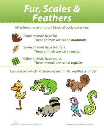 animal coverings kid ideas advice help animal