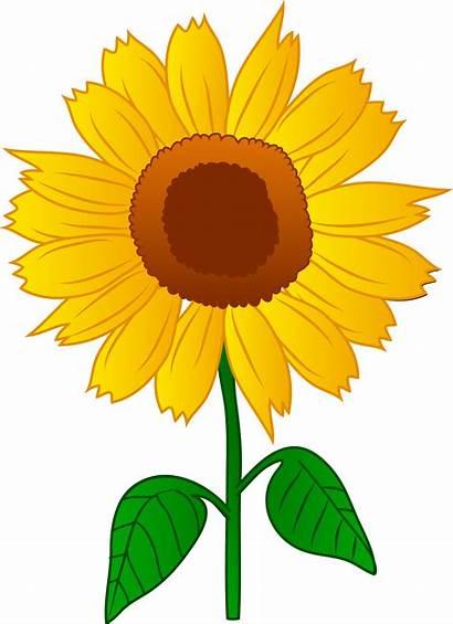 Sunflower Clip Clipart Printable Flower Iron Categories