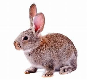 Rabbit Health Check