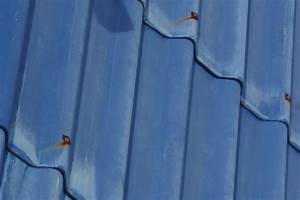 Corrugated Roofing  Corrugated Roofing Leaks