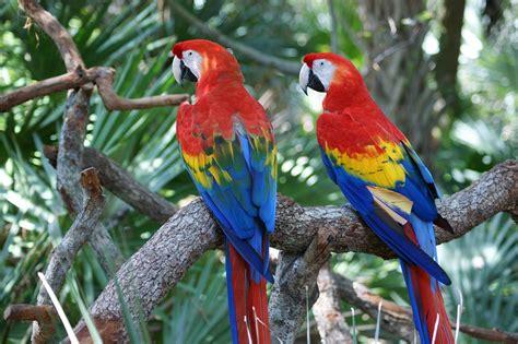 big colorful bird macaw parrot 183 free photo on pixabay