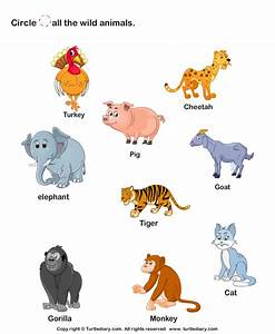 Wild Animals Worksheet3 | *♣* Smart Kids Printables ...