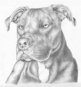 Atilla the Pit Bull by the-jabber-wocky on DeviantArt