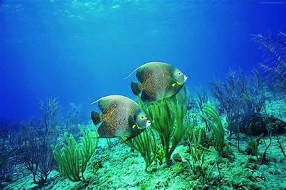Underwater Fish Desktop Water Ocean Wallpapers Sea