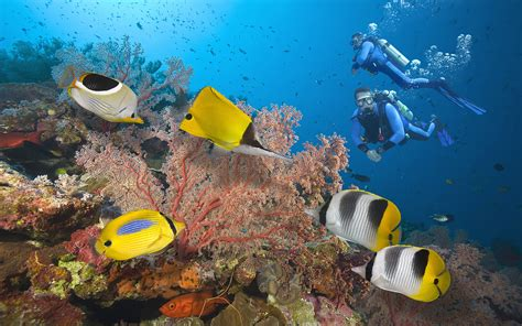 great barrier reef divers seabed  exotic colorful fish