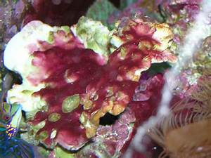 Did I Say That: Algae By Any Other Name - Reefs.com