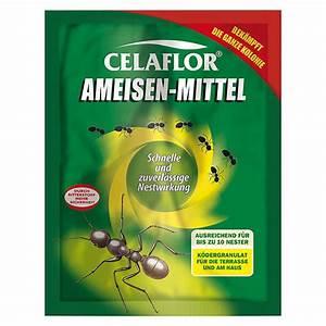 Mittel Gegen Ameisen : celaflor ameisen mittel 100 g 7527 ameisenmittel iahd pflanzenschutz iah duenger ~ Frokenaadalensverden.com Haus und Dekorationen