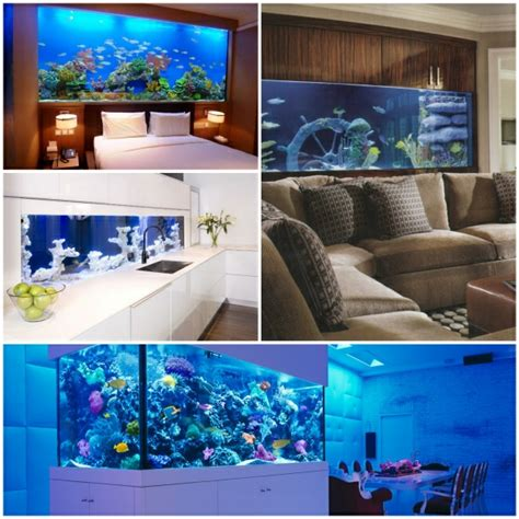 fische kleines aquarium aquarium fische einen exotischen und beruhigenden akzent einf 252 hren