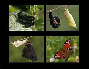 Bedeutung Schmetterling In Der Wohnung : von der stacheligen raupe zum h bschen schmetterling foto bild tiere wildlife ~ Watch28wear.com Haus und Dekorationen