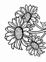 Sunflower Coloring Pages Simple Flowers Flower Drawing Easy Printable Recommended Clipartmag Mycoloring sketch template