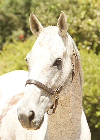 spice red bucket equine rescue