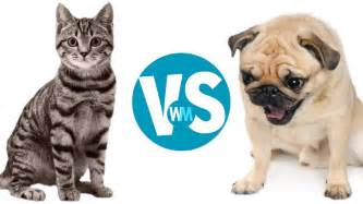 dogs vs cats cats vs dogs which makes a better pet