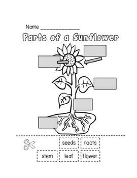 parts of a plant worksheet by erica foster teachers pay 731 | original 1153037 1