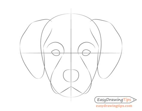 dog head front view drawing step  step easydrawingtips
