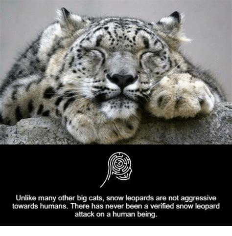Snow Memes 25 Best Memes About Snow Leopard Snow Leopard Memes