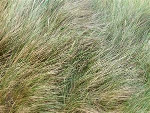 Free Stock Photo 4321 soft grass texture   freeimageslive