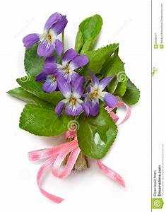Bouquet Of Wild Violets Stock Image - Image: 24365411