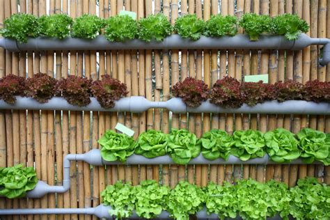 Hidroponika Le by Grow Up How To Design Vertical Gardens For Tiny Spaces