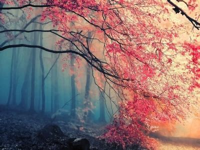 Background Wallpaper Images by Beautiful Background Free Beautiful Backgrounds