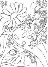 Ladybug Coloring Leave Flowers Cute Insects Background Pages Adult Butterflies Nature sketch template