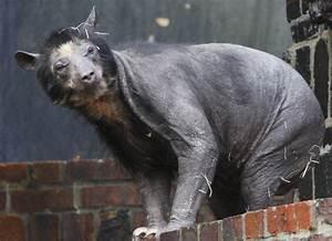 Dolores The Bear's Mysterious And Sad Hair Loss (PHOTOS)