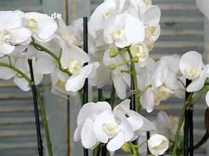 Kunstblumen Orchideen Topf : kunstblumen feine orchideen von c youtube ~ Whattoseeinmadrid.com Haus und Dekorationen