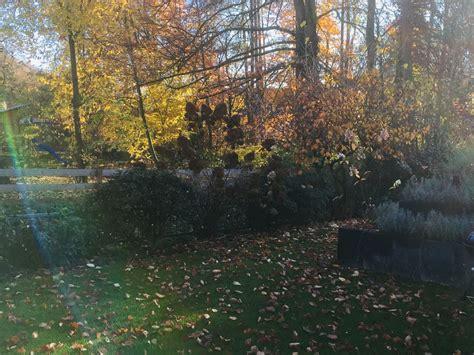 Der Garten Im Herbst by Ferienwohnung Am Bach Hamminkeln Frau Ingrid Jakobi