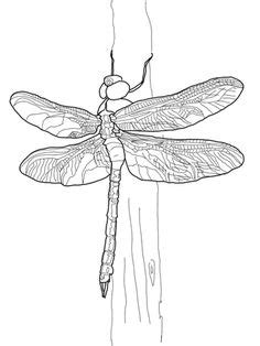Dragonfly Clipart | Great mini stickers from Creative