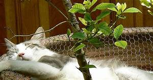 Babysitting Nanny Jobs 25 Plants Poisonous To Cats And 25 Safe Plant Suggestions