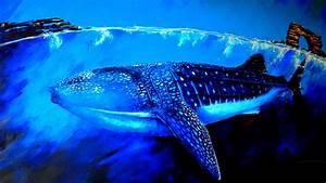 wallpaper whale shark underwater animals 5867