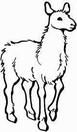 Llama Coloring Printable Template Printables Animals Animal Activity Alpaca Yarn sketch template