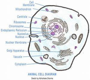 Similarities Between Plant And Animal Cells