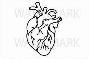 Simple Anatomical Heart Drawing