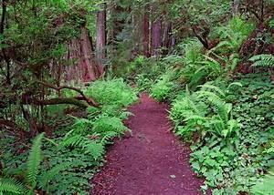 Trillium Falls Trail Leads Through Forest Undergrowth