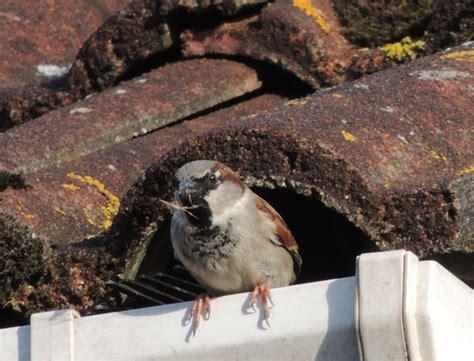 bird proof gutters pest control melbourne