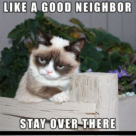 Best Cat Meme - best grumpy cat memes of all time image memes at relatably com