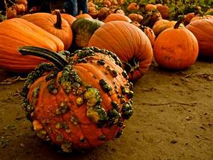 Reasons, For, Warty, Pumpkins