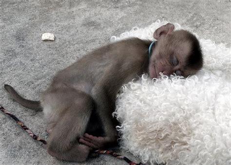 sleeping animals animals zone
