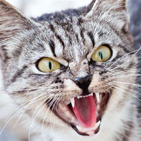 schilddruesenueberfunktion bei katzen tierarzt dr hoelter