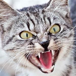 Katze Kotzt Viel : schilddr sen berfunktion bei katzen tierarzt dr h lter royal canin hills di tfutter ~ Frokenaadalensverden.com Haus und Dekorationen