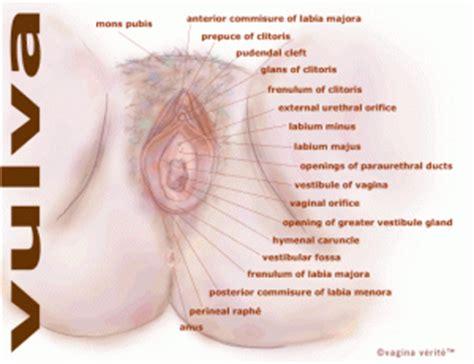 Anatomi Wanita Dewasa Sex Female Body Parts Hot Girls Wallpaper