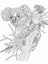 Koala Coloring Adult Mandala Printable Dieren Zentangle Coloriage Animal Kleurplaat Animals Malvorlagen Colouring Adults Bear Erwachsene Kleurplaten Ausmalbilder Ausmalen Tiere sketch template