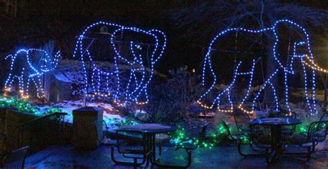 saint louis zoo christmas lights lights camera action 3 ways to celebrate the holidays