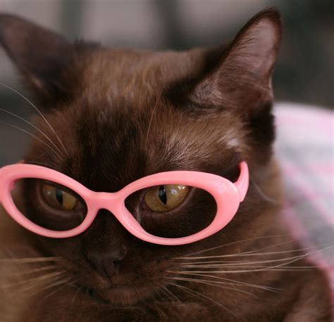 cute cats  sunglasses