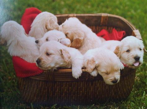puppies   basket  cute pinterest