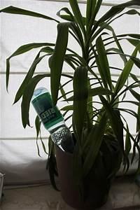 Pflanzen Bewässern Urlaub : im urlaub pflanzen bew ssern tipps ~ Michelbontemps.com Haus und Dekorationen