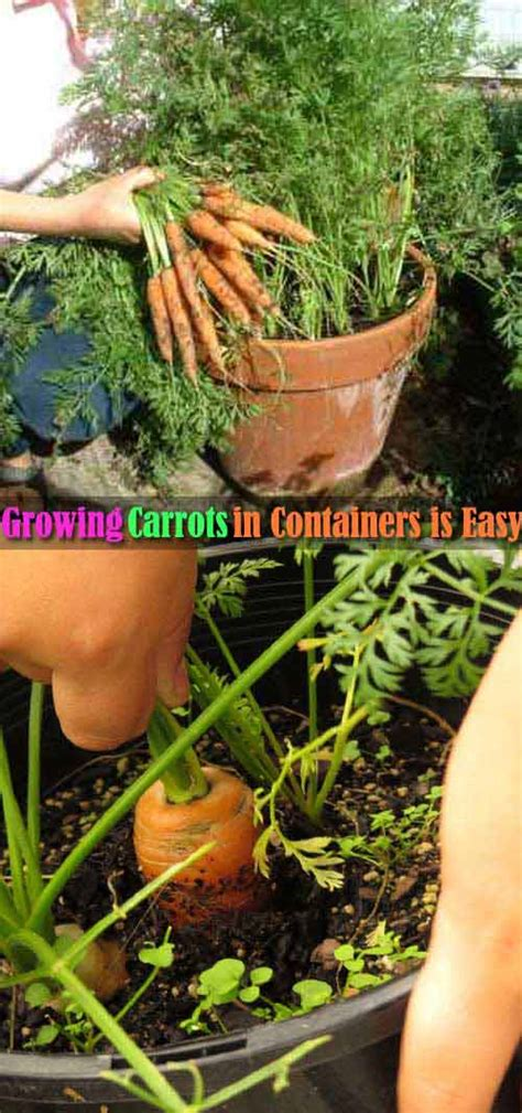 top  exciting ideas  grow potted veggies  fruits