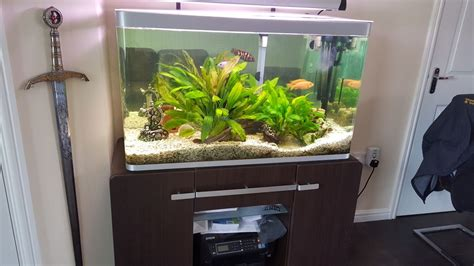 aquarium fish tank fluval osaka 260 dunfermline fife pets4homes